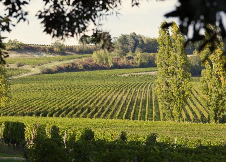 Maison du Vin Castillon Côtes de Bordeaux