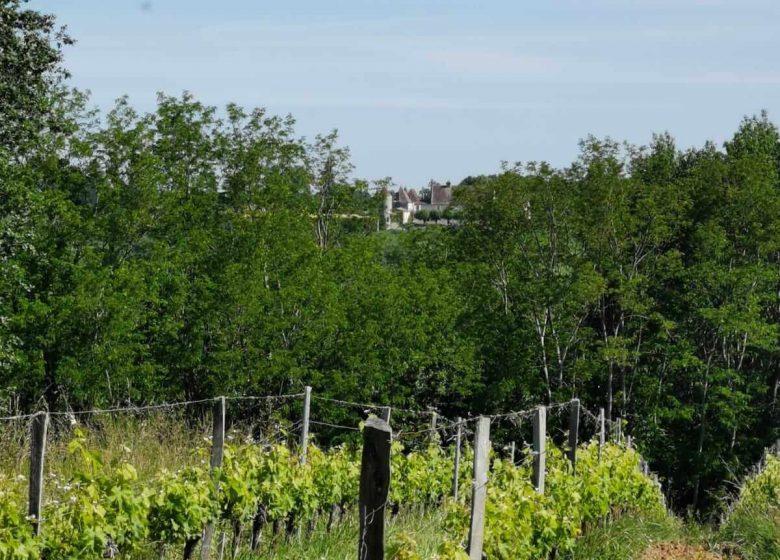 Boucle des coteaux de Castillon-la-Bataille