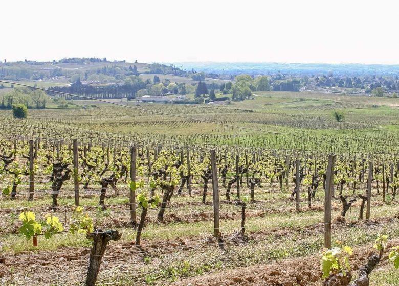 Boucle des coteaux du vignoble Castillonnais